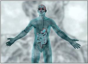 Source : http://psychologie-cognitive.blogspot.fr/2014/02/arte-le-ventre-notre-deuxieme-cerveau.html