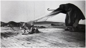 « I like America and America likes me » Mai 1974, Galerie René Block, Joseph Beuys